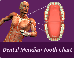 Cosmetic Dentist Farmington Hills - Dental Meridian Tooth Chart